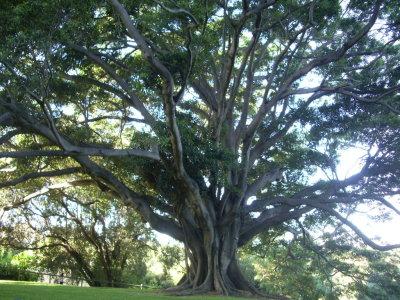 Ecco 10 buone ragioni per piantare un albero